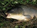 Рыба в северной части Тихого океана может быть заражена радиацией